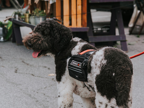 Service Dogs, Our Amazing Four-Legged Friends