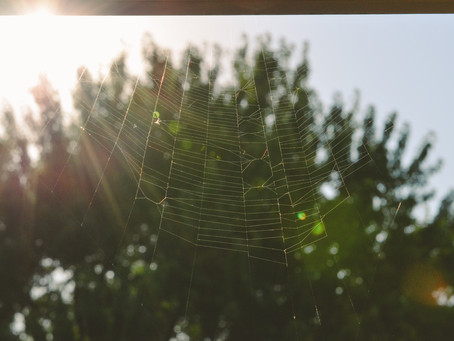 ÇOCUKLAR İÇİN MINDFULNESS EGZERSİZİ: Örümcek Hisleri