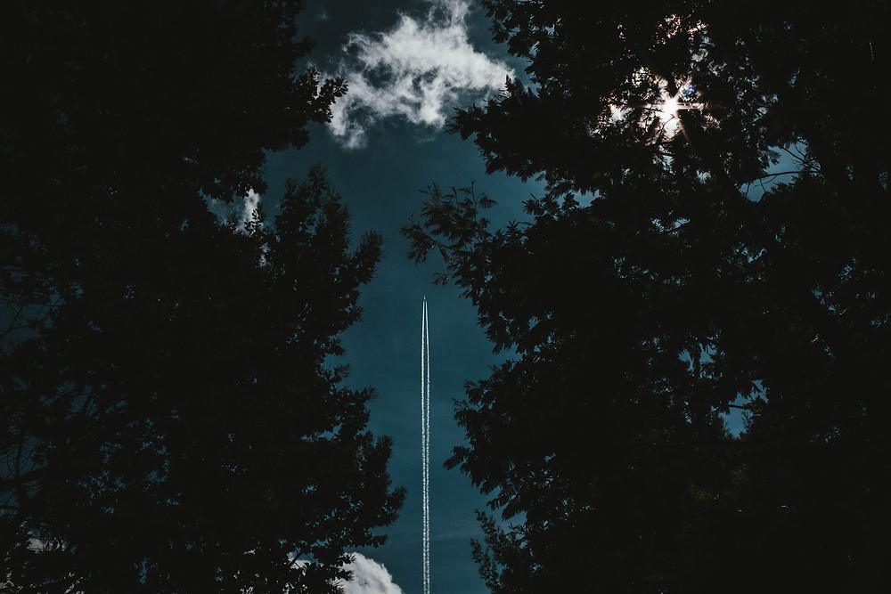 Flugzeug von unten im Wald