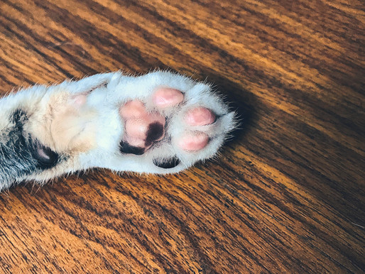 Should You Declaw Your Cat?