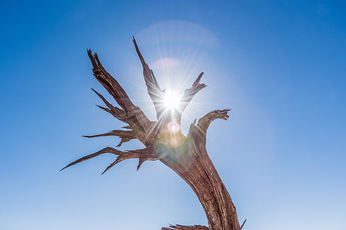 The Dragon Lightworker Trilogy - Healing, Abundance, Ascension & Manifestation