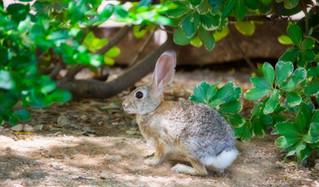 Wild Rabbits Update 2!