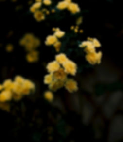 An image of ellow flower agaist  black background eantto symbolise the colour of Eleven Inc logo - yellow