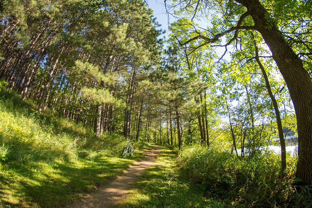 sauk trail hiking forest trail near park forest