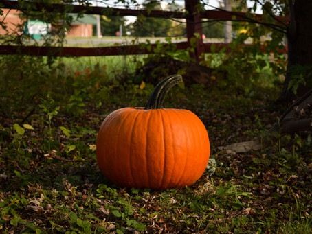"""Get your pumpkins at P.A.Sparks & Sons"""