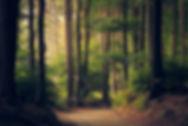 planta virtual forest