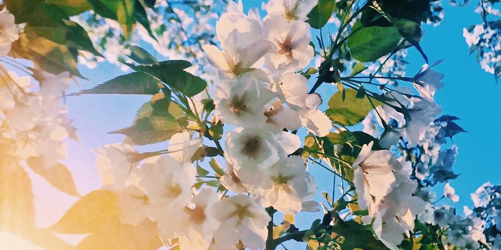 Spring Awakening Event