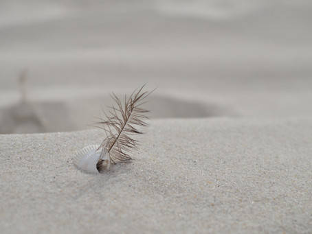 The Feather In The Sand By Michelle Mura
