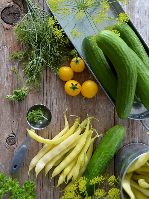 Plant Sale: Lemon Cucumbers