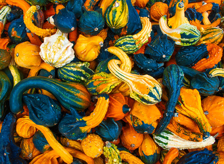 Oh My Gourd: How to Dry Ornamental Gourds