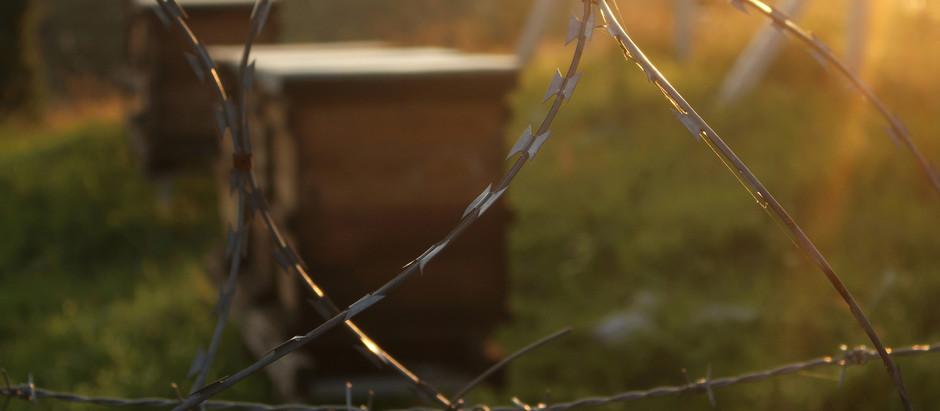 La importancia de mantener ecosistemas y abejas sanas