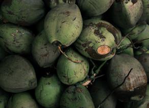 Medicinal Plants:  Pipa or Green Coconut