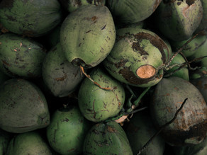 Medicinal Plants:  Pipa or Green Coconut