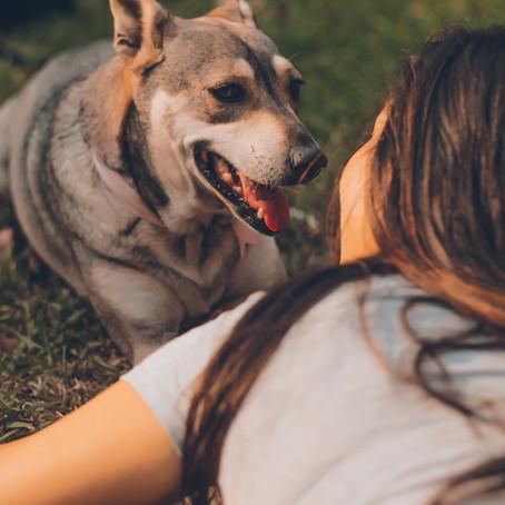Family Life: Pets