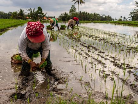 Bersahabat dengan Alam Melalui Sustainable Farming