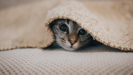 How to stop bad behavior in your kittens