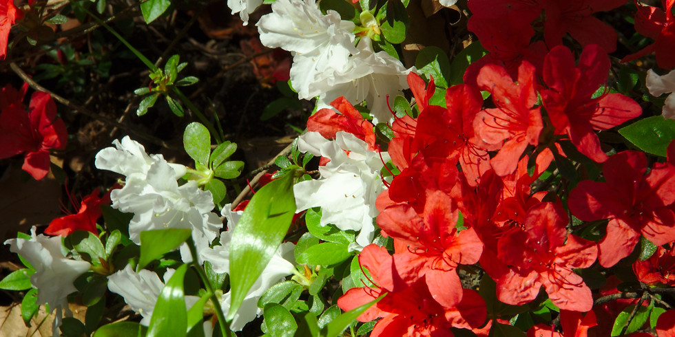 TRIPACK : cultiver son jardin.Cession 1