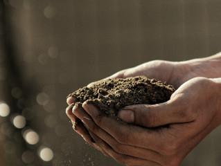 Turn the soil...