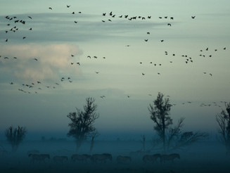 Vogelgids