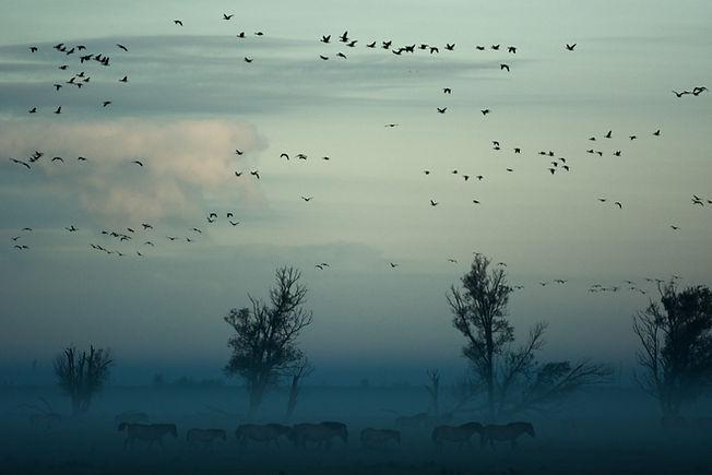 Image by Vincent van Zalinge