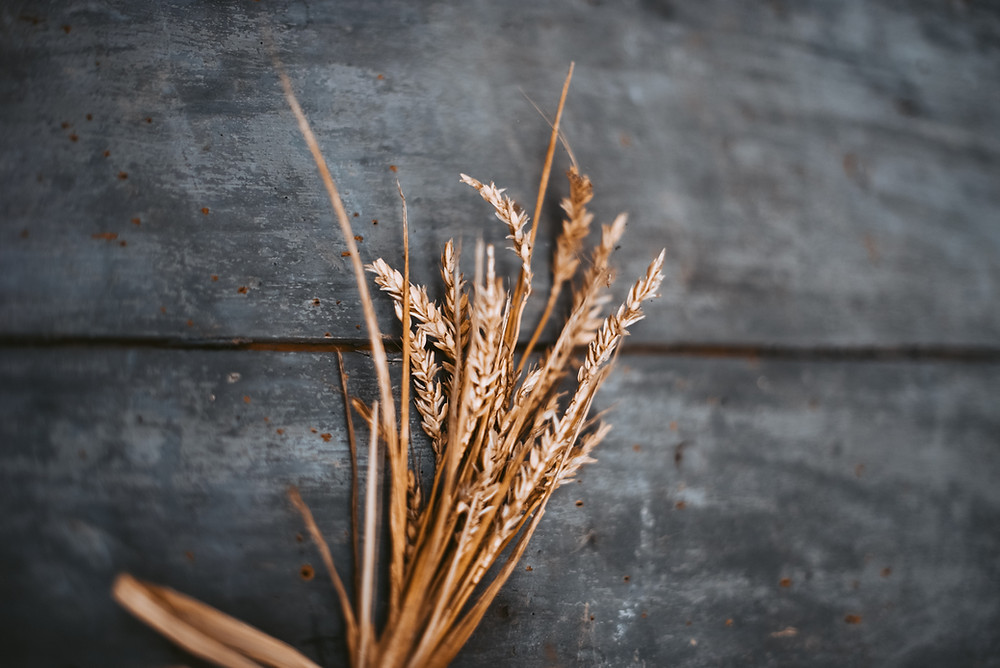 A sheaf of wheat used to represent the first offering of first fruits on the day of the wave sheaf offering.