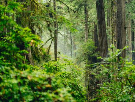Redwoods & Jägermeister