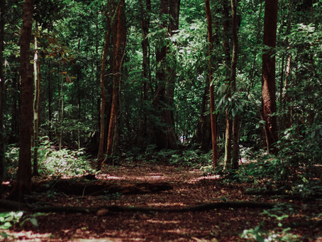 Forest Bathing for Mental Health