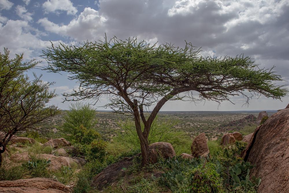 Somaliland Landscape