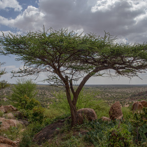 Somaliland: The Quest for Independence