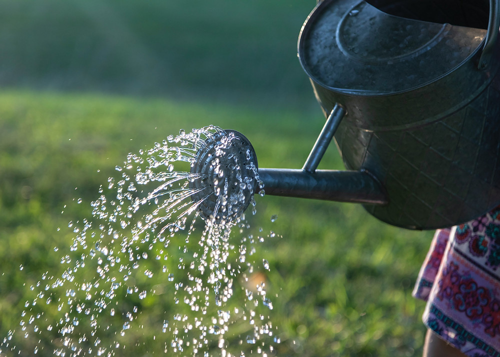 watering can spreading water in the summer months