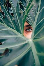 eyes and a leaf