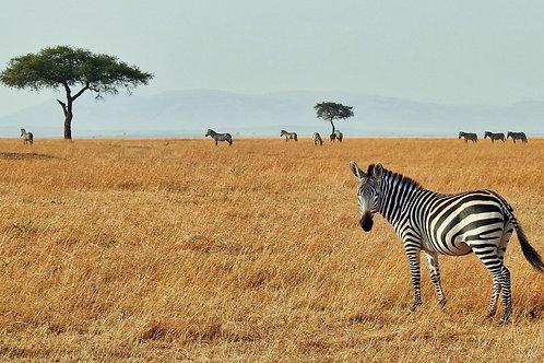 Tanzania 8 días: Apartado