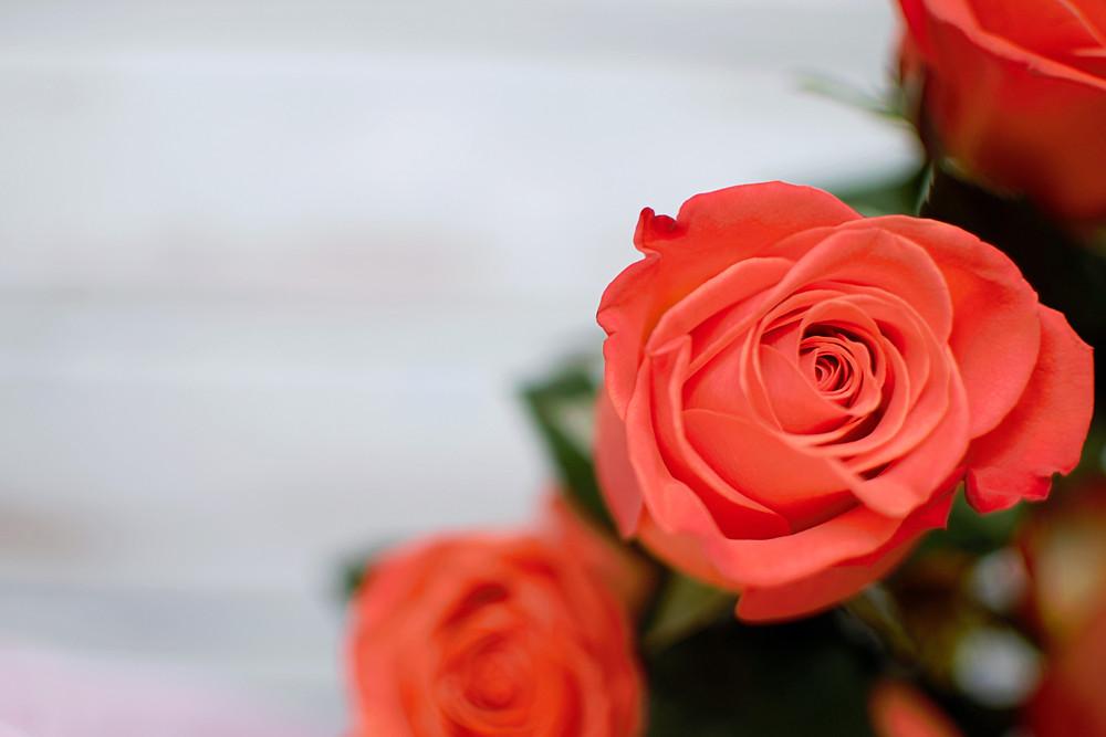 """Πανέμορφα μπουκέτα από κόκκινα τριαντάφυλλα θα βρείτε στο ανθοπωλείο """"'Ανοιξη"""""""
