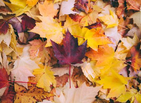 Vertragen in de herfst