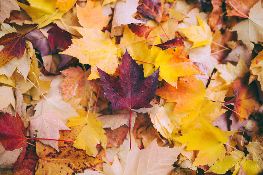 Autumn Leaves | Victoria Texas Office | Counseling4Life, LLC | Counseling in San Antonio, Counseling in San Angelo, Counseling in Victoria, Texas | Anxiety, depression, trauma, faith based, panic, stress, anger, bereavement, couples, children, play therapy, Christian counseling