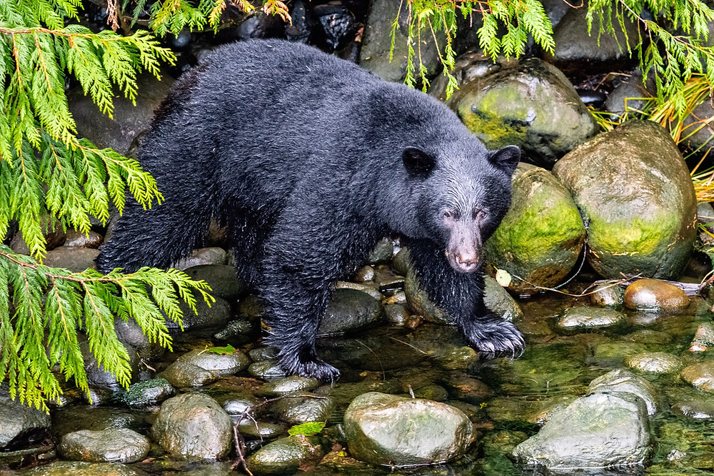 The Black Bear Scenic Byway is a short distance from our Leesburg rental