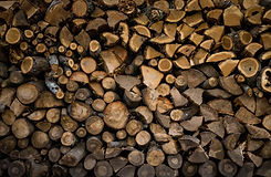Firewood stacked neatly for drying