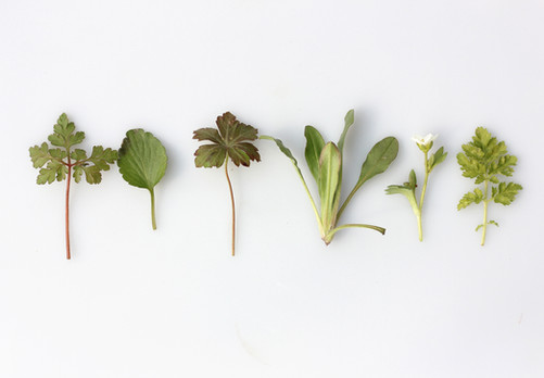 Three herbs to boost your fertility naturally and fall pregnant faster