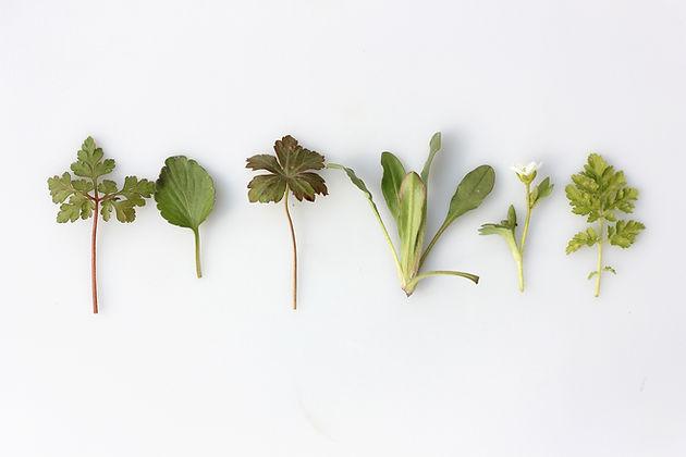Image by Angèle Kamp