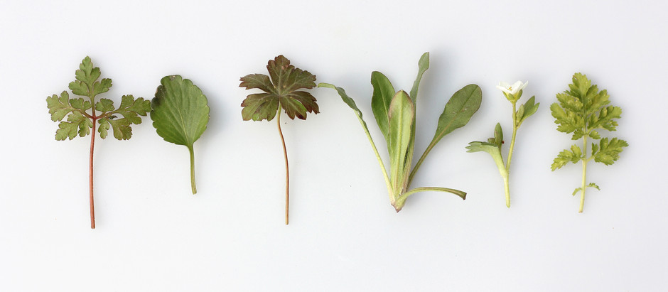 New Series Alert: Learn Herbs with Me!