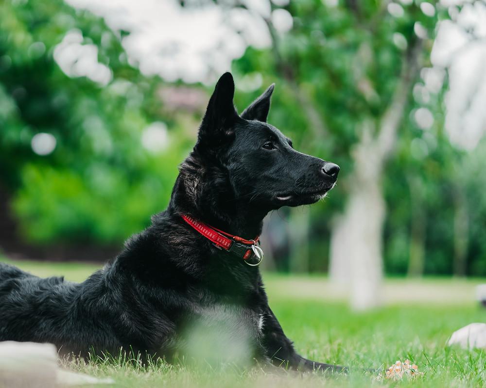 CCL tear injury in dog | Cuyamaca Animal Hospital | Santee, San Diego