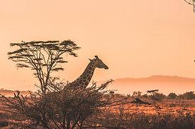Image by Harshil Gudka