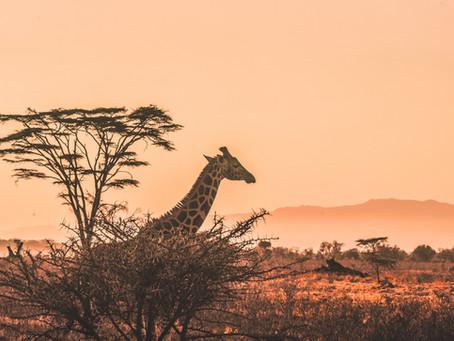 Comment bien préparer son safari ? nos conseils
