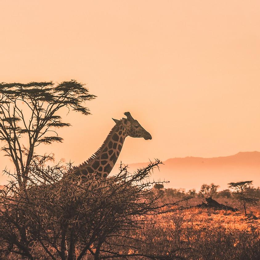 Safari Trip Drawing