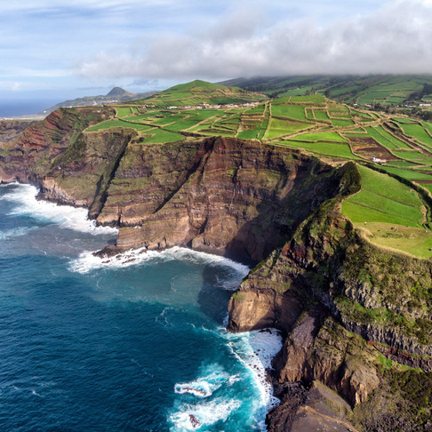 Wildlife Highlights of the Azores