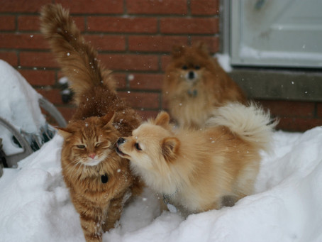 Comprendre et optimiser la cohabitation chez le chat