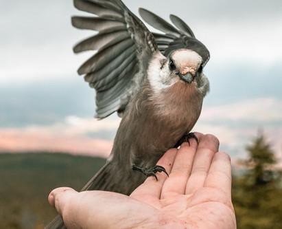 Gut zu Vögeln!
