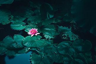 Image de cheng feng