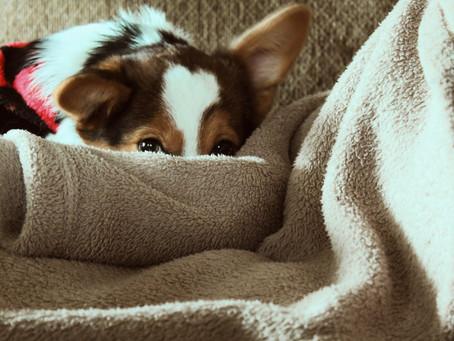 Ist Dein Hund wirklich ein Angsthund?