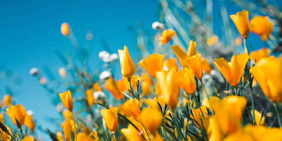 Empire LRP: Spring Equinox
